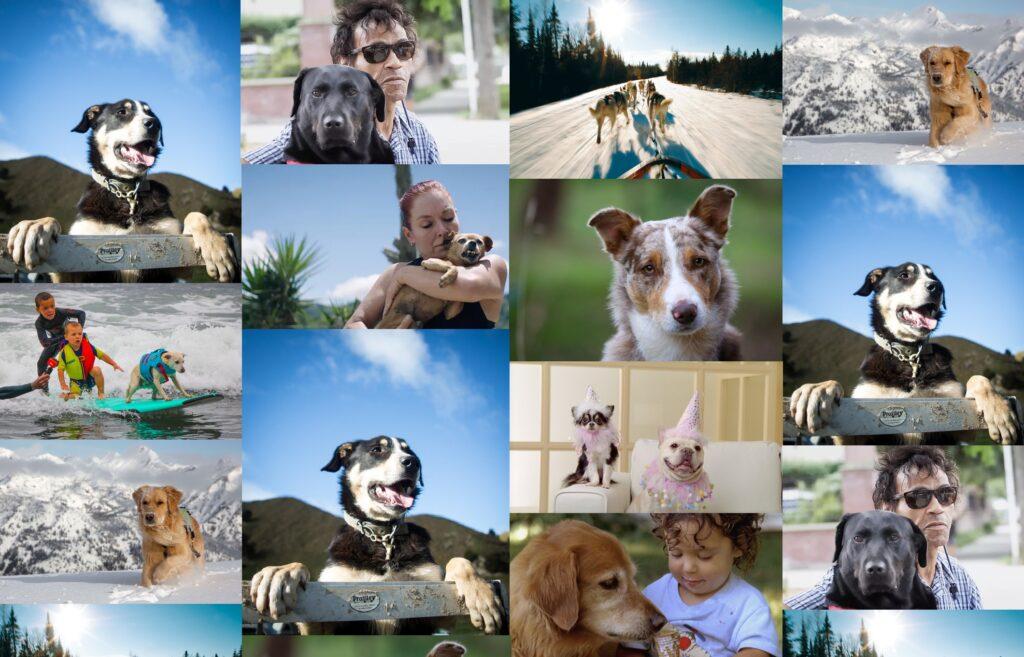 BANFF 2020 Top Dog Film Festival
